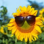 Sunflower_With_Sunglasses